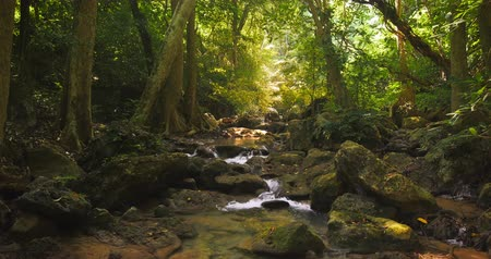 deep forest : Deep tropical forest and small creek running between stones tranquil and peaceful nature background. Tracking slider video shot of relaxing natural landscape in 4K quality