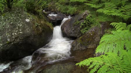 ribeiro : Park greenery and mountain river stream in deep tropical forest. Natural creek flows between rocks and mossy stones. Peaceful wild nature