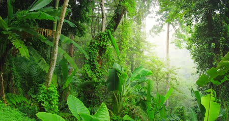floresta tropical : Dolly tracking video shot of green wilderness lush of tropical rainforest. Plants of jungle forest