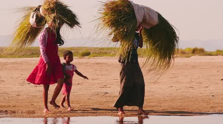 бедный : young females from local Burmese village carry cut grass by river bank Стоковые видеозаписи