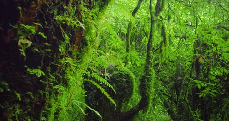 mossy forest : Beautiful green forest in national park Stock Footage
