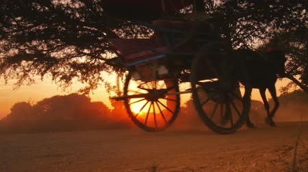 çekme : Low angle view of running horse on dirt road in Bagan Myanmar Burma at sunset Stok Video