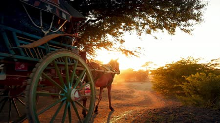sáně : Beautiful sunset scene in Bagan, Myanmar. Slow motion video of horse carts moving in rural Burma Dostupné videozáznamy