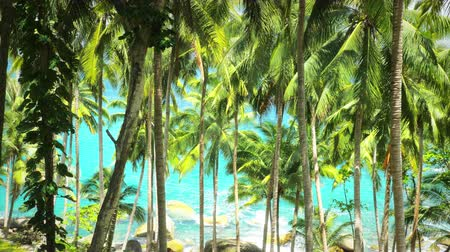 trópicos : Tropical paradise nature background. Coconut palmtrees at sunny day in tropics Vídeos