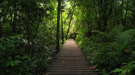deep forest : Adventure background of walk path leading to green tropical jungle rainforest Stock Footage