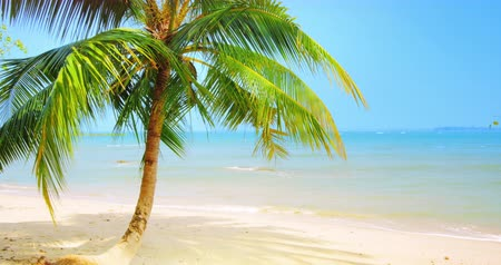 Idyllic tropical background of palm tree on scenic white sand beach of sea coast