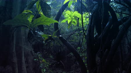 esőerdő : Dark spooky forest with light shining through canopy of jungle lianas after rain Stock mozgókép