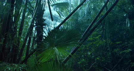 floresta tropical : Heavy rainfall shower in evergreen tropical rain forest in rainy monsoon season