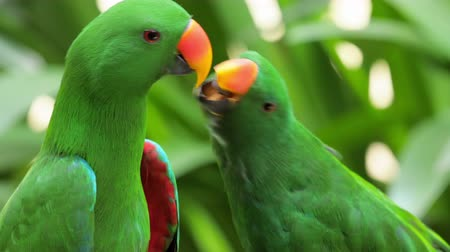 ara papagáj : Bird of tropical rainforest large green parrot with orange beak feeds other
