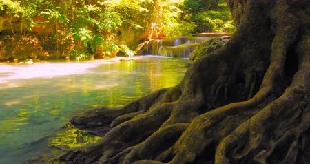 Канчанабури : Peaceful nature background of river flowing near old big tree with twisted roots