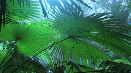 Тропический климат : Foggy morning and blue mist in humid rain forest. Wet tropical plants under rain