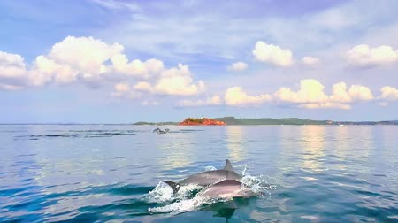 Тихий океан : Young cute dolphin with his mother jumps out of water in sea coast of Sri Lanka Стоковые видеозаписи