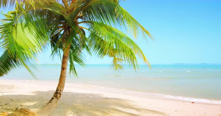 coconut palm tree : Coconut palm tree on white sand beach of calm sea shore and blue sky at summer