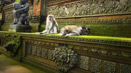 macaca fascicularis : Family of apes in sacred Monkey Forest Temple in Ubud, Bali, Indonesia