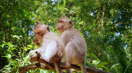 macaca fascicularis : Cute funny mankeys in jungle rain forest sit on tree branch at sunny day. Fauna and flora of tropical nature park in Bali island, Indonesia
