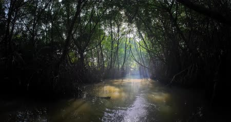 walkthrough : Walkthrough camera motion in dark jungle river environment with dense tropical mangrove forest growing in water. Sun light in the end of tunnel reflecting on swamp surface