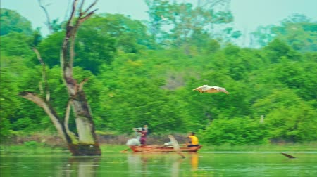 spot billed pelican : Pelican bird flies and glides near lake water surface slow motion video. Beautiful authentic nature of Sri Lanka wildlife