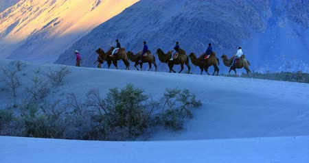 zelândia : Tourists enjoy camel safari in Ladakh mountains in north India