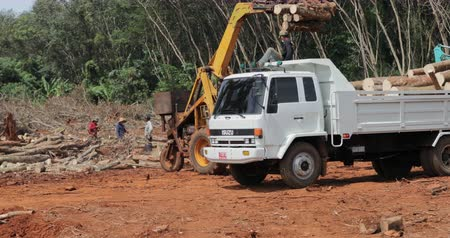 borneo : Forest logging heavy machinery tractor loads truck with cut trees by crane on rainforest clearing site in Asia. Stock Footage