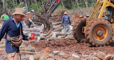 borneo : People and professional industrial logging equipment work on site cutting and collecting tree trunks in Thailand. Landscape of endangered ecosystem and wildlife of tropical rainforest