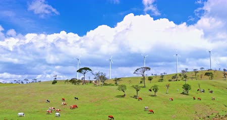 cow farm : Clean sustainable enegry and ecology conservation concept. Wind mill turbines on green hills in rural countryside with domestic dairy cows graze on summer pasture Stock Footage