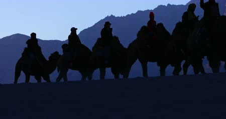 zelândia : Silhouette of camel caravan In Himalaya mountains. Tourist attraction and travel destination