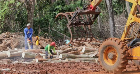 equador : Deforestation of tropical rainforest in asian jungle wilderness. People and heavy machinery cut and move tree trunks harvesting wood and timber in large scale damaging wild nature and ecology