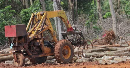 equador : Heavy machinery tractor sorting tree logs on logging site of industrial timber production in Thailand. Forest destruction landscape Stock Footage