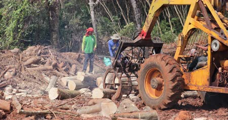 borneo : Tractor moves big chunks of cut trees on logging site. Rainforest deforestation background of timber industry damaging jungle forest ecosystem and planet climate