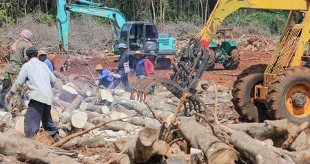 lumber : Deforestation activity on logging site in Thailand. Rainforest environment destruction landscape
