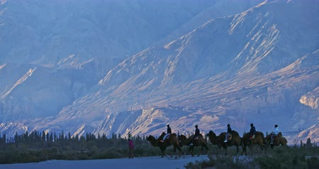 himalaia : Traveling to Ladakh, northern India. Tourists on camel caravan move near mountains Stock Footage
