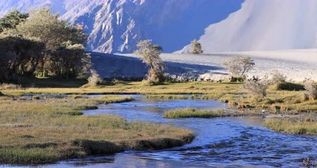 River flows through Nubra Valley desert in Ladakh, India. Beautiful nature of northern indian regions
