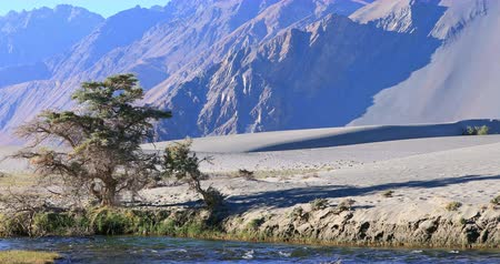 Nubra valley scenery nature landscape in India, Ladakh and Kashmir region. Scenic view of river stream in desert sand against high rocky Himalaya mountains
