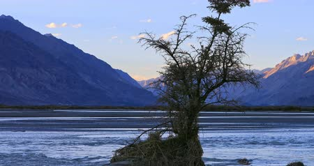 Evening view of Shyok river in Nubra Valley, Ladakh, India. Calm and peaceful nature 4K video background of wide water stream at sunset