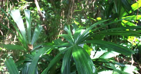 Exotic leaves of tropical plants in rainforest lush move on wind breeze