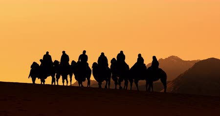 himalaia : Sunset silhouettes of camels in Ladakh India. Tourists on adventure safari tour in Nubra Valley Stock Footage