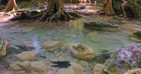 School of fish in river flowing in tropical jungle forest beautiful nature background