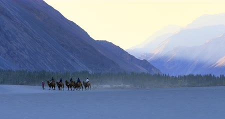 Camel riding tours and trips for tourists in Ladakh, India
