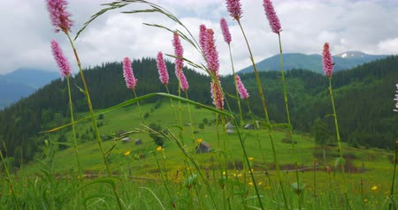 Carpathians rural countryside summer season view
