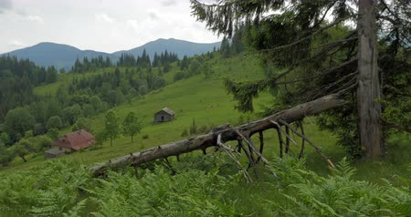 Green Carpathians nature and old village houses on mountain hill side. Travel destinations in eastern Europe