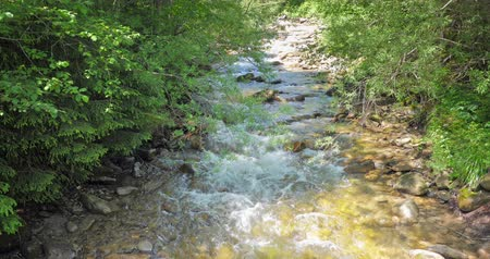 Mountain stream flow through green forest under summer sunshine in Carpathian Mountains in rural Ukraine
