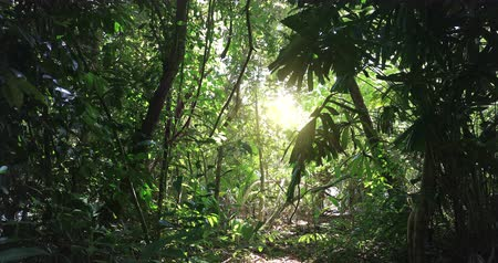 Sunlight through tree leaves. Jungle rainforest nature background 影像素材