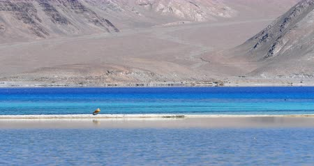 Ladakh India - Pangong Tso lake 影像素材