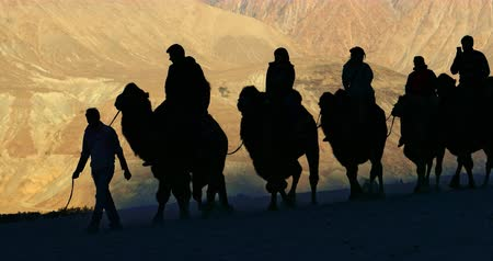 Silhouettes of camels and tourists in safari trip caravan on Ladakh sand dunes 影像素材