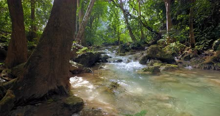 нетронутый : River stream flows in jungle forest. Amazing tropical nature of asian rainforest
