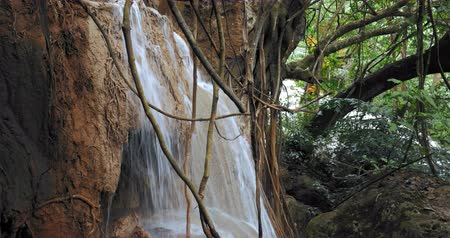 katarakt : Waterfall and lianas plants in jungle forest. Twisted vines hang from trees in rainforest Stok Video