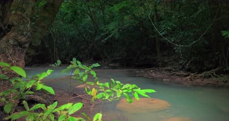 corrente : Wilderness of tropical rainforest. River in jungle