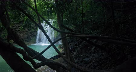 doğa : Jungle nature landscape. Waterfall in tropical forest hidden behind lianas, vines and hanging creeper plants Stok Video