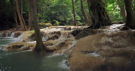 corrente : River stream flows in forest. Jungle vegetation and nature background