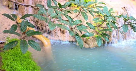 mírumilovnost : Serene nature background of tropical plant near water stream